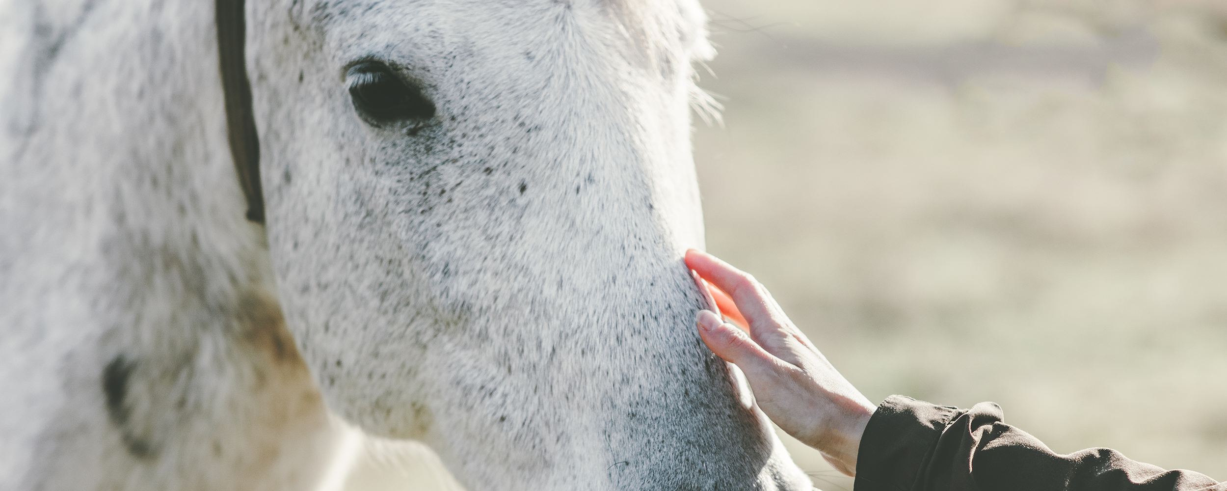 Equine Therapy Wellness Retreat in the heart of Banff National Park